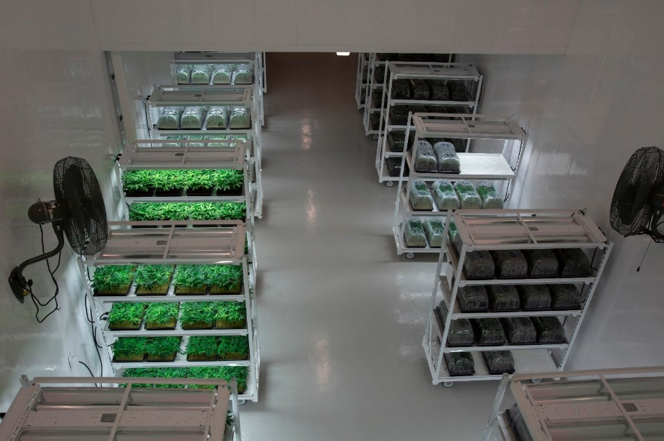 Epoxy flooring cannabis facility in CT or MA